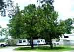 RV Parks in Sulphur Louisiana